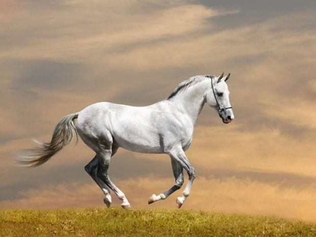 Το σύμβολο του Αλόγου και η ερμηνεία του στο Φενγκ Σούι