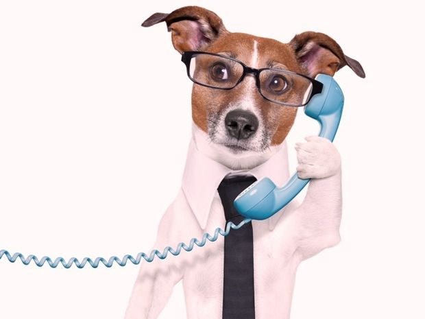 Τι λένε συνήθως τα ζώδια όταν τηλεφωνούν στους φίλους τους;