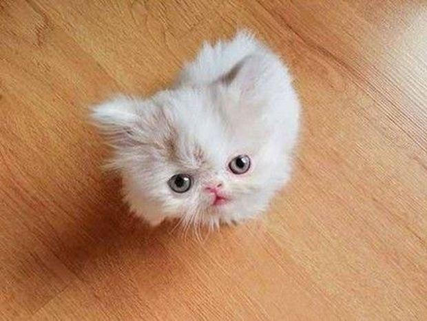ΘΑ ΣΑΣ ΜΑΓΕΨΕΙ!! Δείτε τις... περιπέτειες αυτής της μικροσκοπικής γάτας! (PHOTOS)