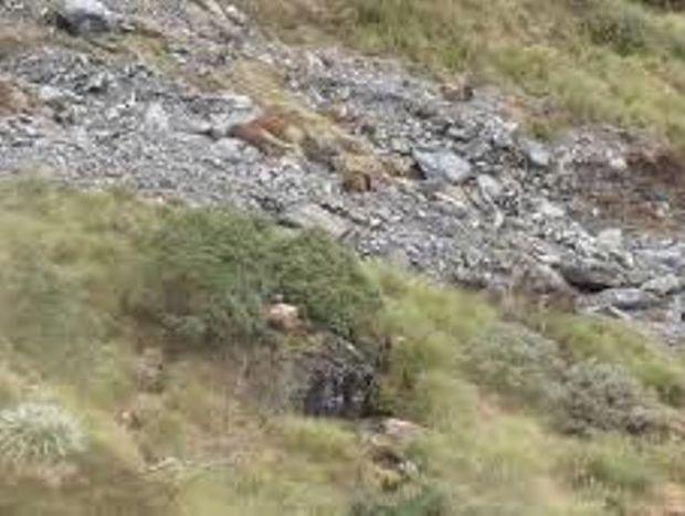 ΑΠΙΘΑΝΟ: Μπορείτε να βρείτε πόσα ζώα κρύβονται σε αυτό το τοπίο; (Βίντεο)