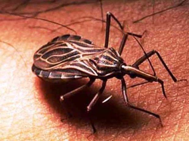 Αστρολογική επικαιρότητα, 11/11: Το μολυσμένο έντομο Chagas σπέρνει τον πανικό στις ΗΠΑ