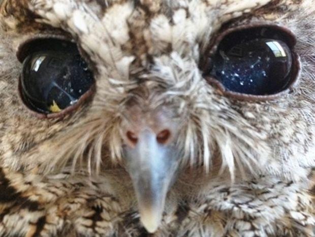 ΜΑΓΕΥΤΙΚΟ: Η τυφλή κουκουβάγια με μάτια σαν έναστρoς νυχτερινός ουρανός