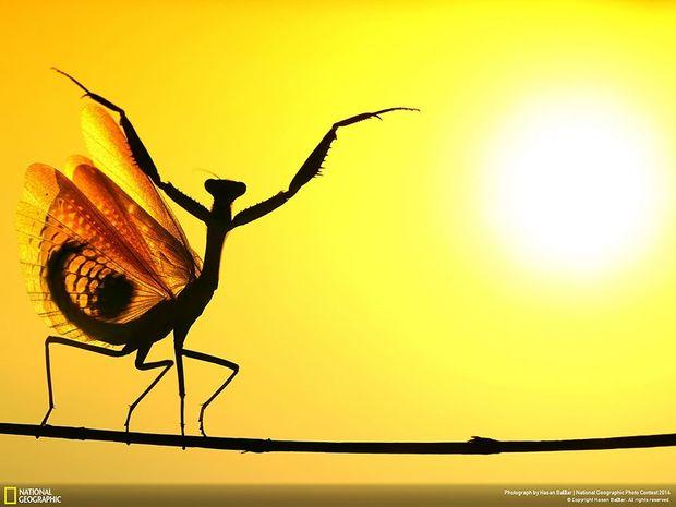 20 πανέμορφες φωτογραφίες από το διαγωνισμό του National Geographic 2014