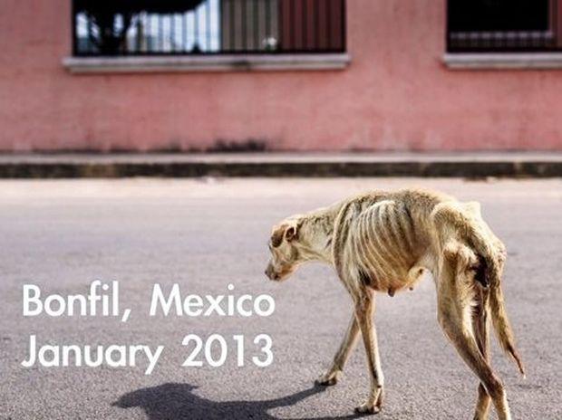 Δείτε πώς έγινε αυτό το σκυλάκι όταν βρέθηκε μια οικογένεια και το αγάπησε!