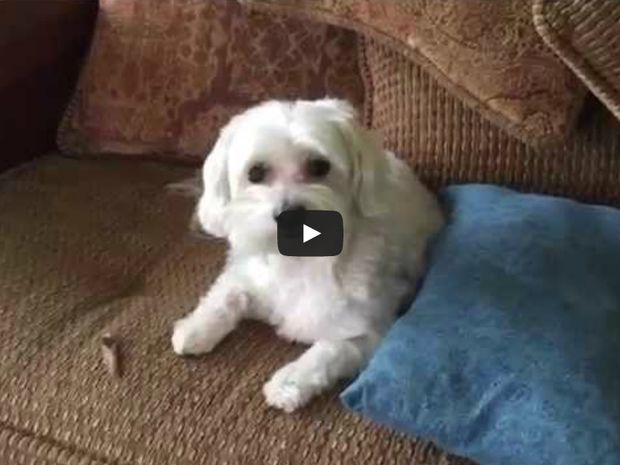 Ξεκαρδιστικό: Το σπίτι είναι άνω κάτω και ο ένοχος σκύλος είναι απλά απολαυστικός!