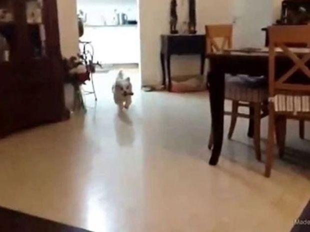 ΞΕΚΑΡΔΙΣΤΙΚΟ: Σκύλος πάει να ανέβει στον καναπέ και... (video)