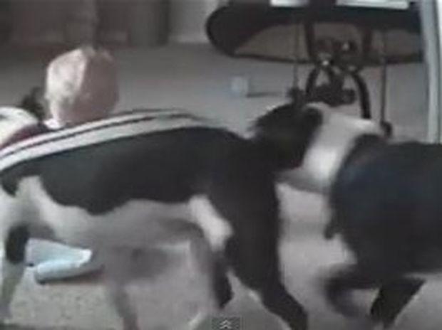 Γιατί οι σκύλοι είναι οι πιο χαριτωμένοι φύλακες των παιδιών (video)