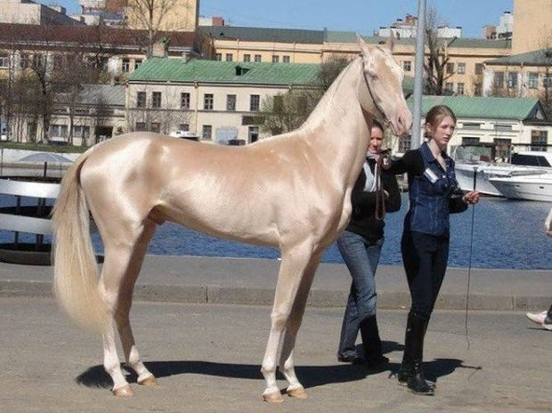 Πανέμορφα! Δείτε τα πιο εντυπωσιακά και σπάνια άλογα του κόσμου