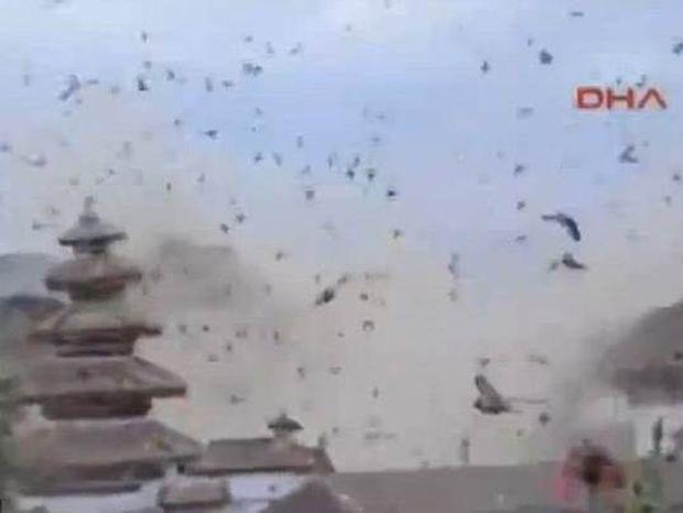 Νεπάλ: Η αντίδραση των πουλιών την ώρα του φονικού σεισμού (video)