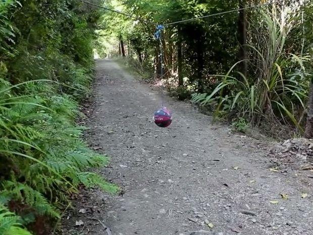 Τι θα γίνει αν κρεμάσεις μια μπάλα στο δάσος; Δεν πάει το μυαλό σας! Δείτε το απίθανο βίντεο!