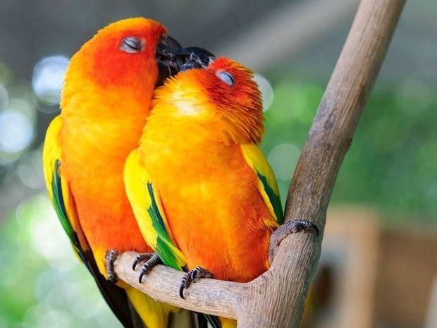 Ακόμα και τα ζώα ερωτεύονται! Δείτε φωτογραφίες από το ζωικό βασίλειο γεμάτες έρωτα!