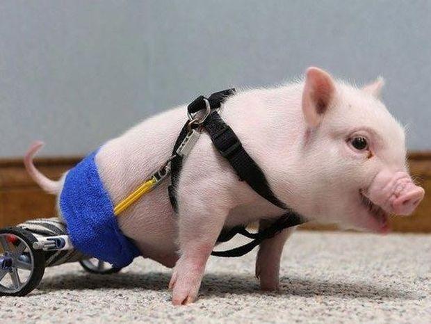 Ανάπηρα ζωάκια που περπάτησαν ξανά με τη βοήθεια της τεχνολογίας! (Βίντεο)