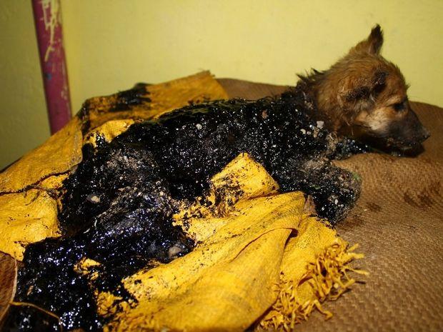 Η συγκινητική διάσωση του μικρού σκύλου που καλύφθηκε με καυτή πίσσα! (βίντεο)