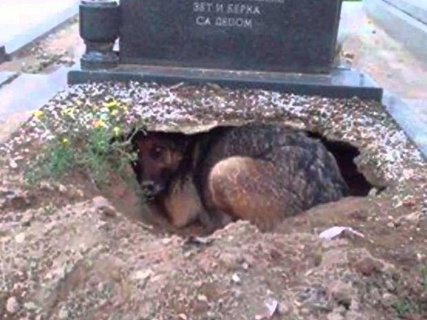 Ο ιδιοκτήτης του έφυγε από τη ζωή και αυτός ο σκύλος τον ακολούθησε στον τάφο του!