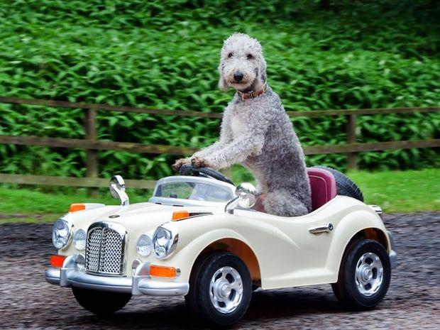Τον λένε Μπάρι και έχει ξετρελάνει τους πάντες με το ταλέντο του στην οδήγηση!