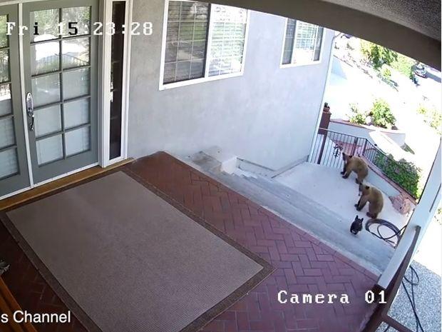 Συγκλονιστικό! Ο γενναίος σκυλάκος τα έβαλε με δύο αρκούδες και δε φαντάζεστε τι συνέβη! (video)