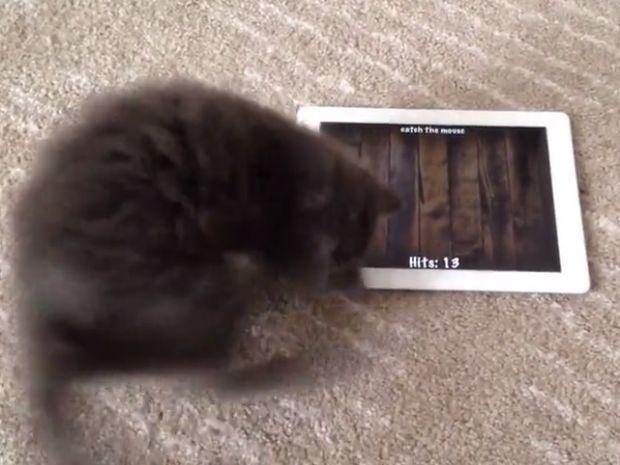 Καταπληκτικό! Το γατάκι που λατρεύει τα παιχνίδια στο τάμπλετ και μας ξετρελαίνει! (video)