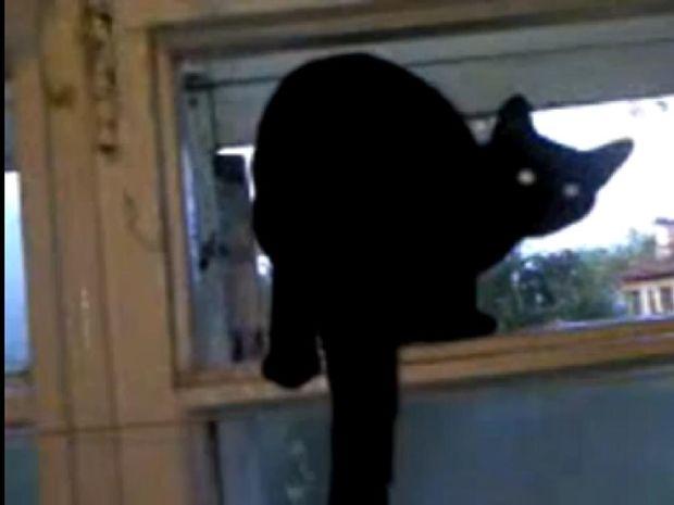 Δείτε το απίστευτο… γάβγισμα αυτής της γάτας που γίνεται νιαούρισμα όταν κάποιος τη βλέπει! (video)