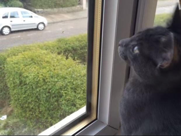 Δείτε την ξεκαρδιστική αντίδραση αυτής της γάτας όταν βλέπει για πρώτη φορά χιόνι (video)
