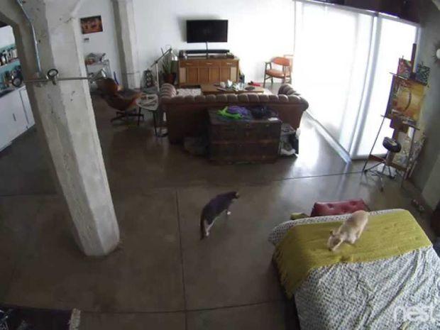 Ο σκύλος γαβγίζει ασταμάτητα αλλά η γάτα θέλει την ησυχία της! Δε φαντάζεστε τη συνέχεια! (video)