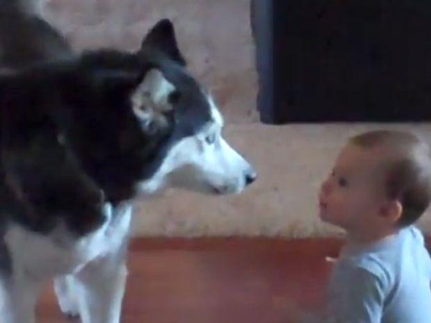Δείτε τον πιο απίθανο διάλογο που έγινε ποτέ ανάμεσα στο μωράκι και στο χάσκι! (video)