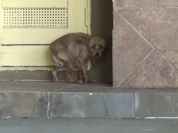 Η εγκαταλελειμμένη σκυλίτσα υπέφερε πολλά. Δείτε τη συγκινητική προσπάθεια διάσωσης της! (video)