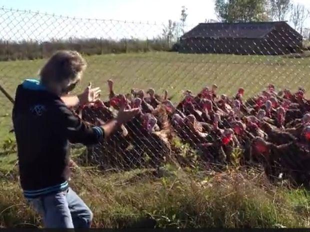 Απίστευτο! Ο άντρας μιλάει στις γαλοπούλες και αυτές τον αποθεώνουν! (video)