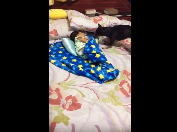 Το κουτάβι που φροντίζει αυτό το μωράκι είναι ό,τι πιο γλυκό θα δείτε σήμερα! (video)