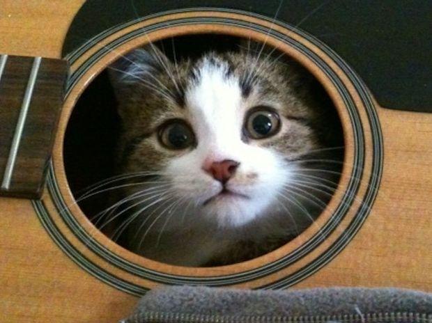 Αυτά είναι μερικά από τα πιο απίθανα μέρη όπου θα ψάχνατε τη γάτα σας! (photos)