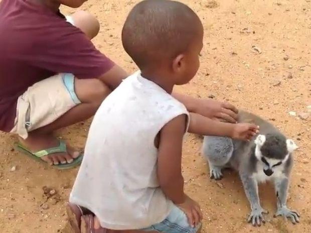 Ξεκαρδιστικό! Δείτε τον λεμούριους που «απαιτεί» να τον ξύσουν λίγο στην πλάτη! (video)