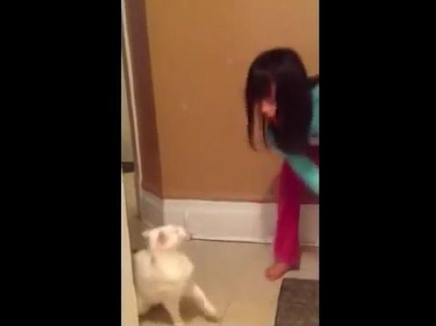 Η υπομονή έχει και τα όρια της! Δείτε την εκδίκηση της γάτας! (video)
