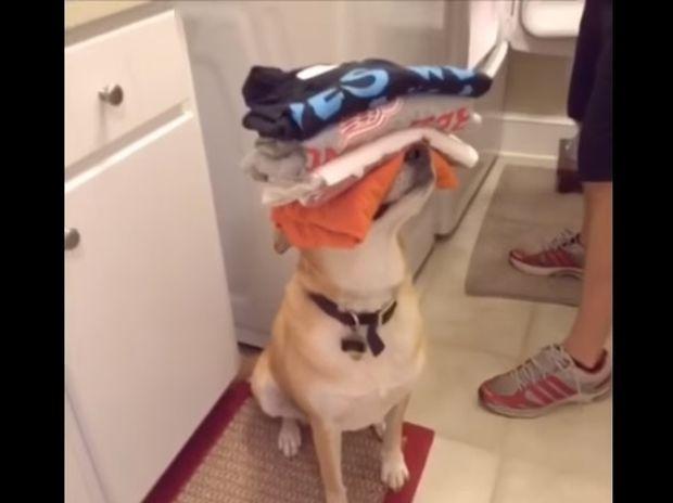 Απίθανο! Αυτός ο σκυλάκος είναι ο καλύτερος συγκάτοικος του κόσμου! (video)