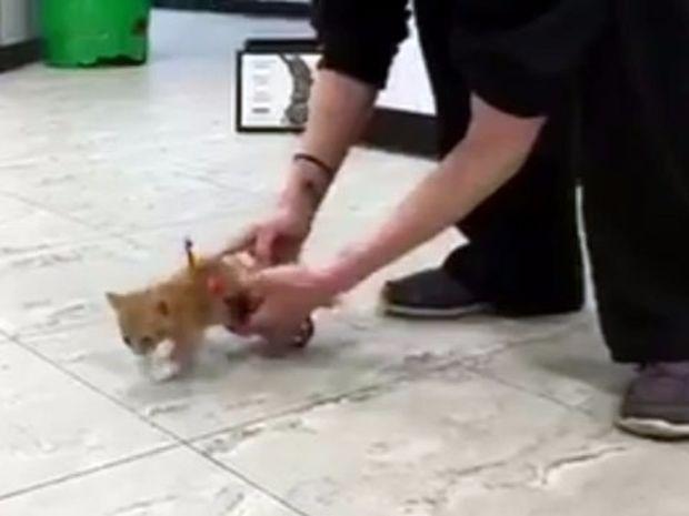 Συγκινητικό! Δείτε το παράλυτο γατάκι που συνειδητοποιεί ότι μπορεί να τρέξει ξανά! (video)