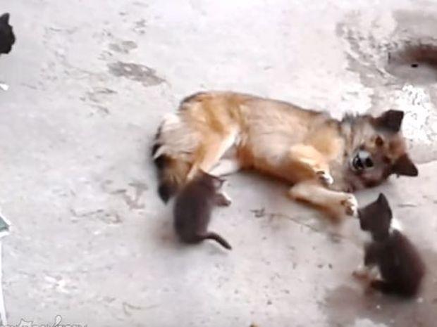 Η μαμά γάτα συναντά έναν φίλο απ' τα παλιά και του γνωρίζει τα μικρά της! (video)