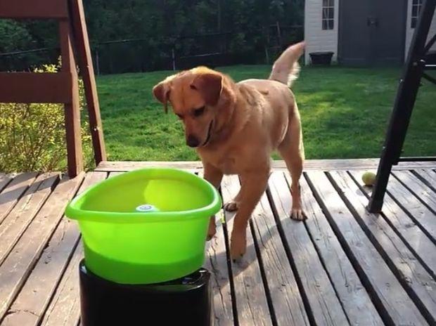 Απίθανο! Δείτε τον σκυλάκο που τρελαίνεται για το καινούργιο του παιχνίδι! (video)