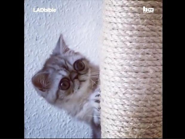 Ο γάτος με τα μεγαλύτερα μάτια στον κόσμο! (video)