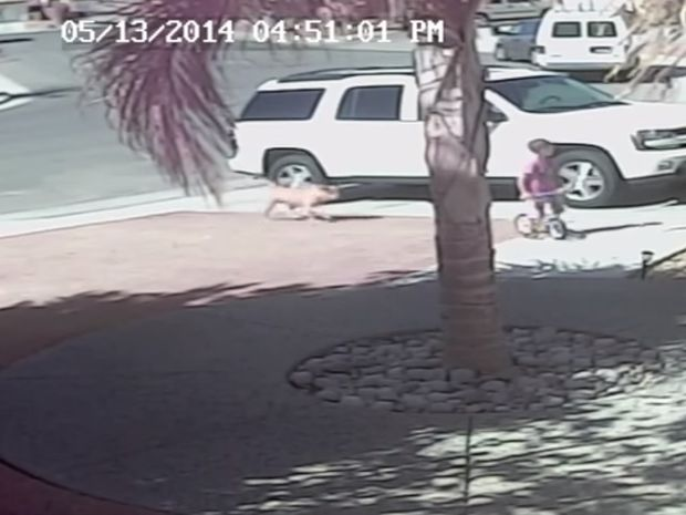 Η γάτα σώζει το αγοράκι από την επίθεση ενός άγριου σκύλου! (video)