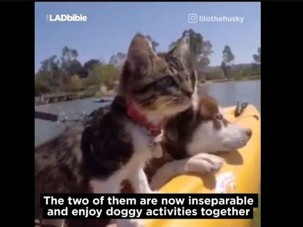 Δείτε τη γάτα που πιστεύει ότι είναι σκύλος! (video)