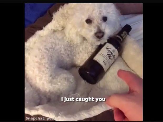 Ξεκαρδιστικό! Η σκυλίτσα έχει σοβαρό πρόβλημα αλκοολισμού! (video)
