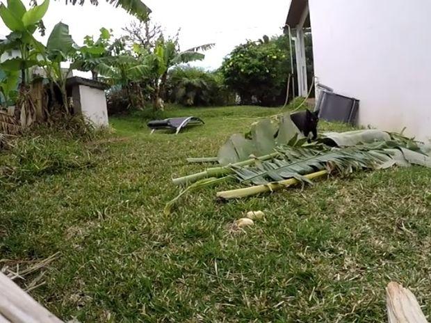 Η γάτα πέτυχε το τέλειο καμουφλάζ