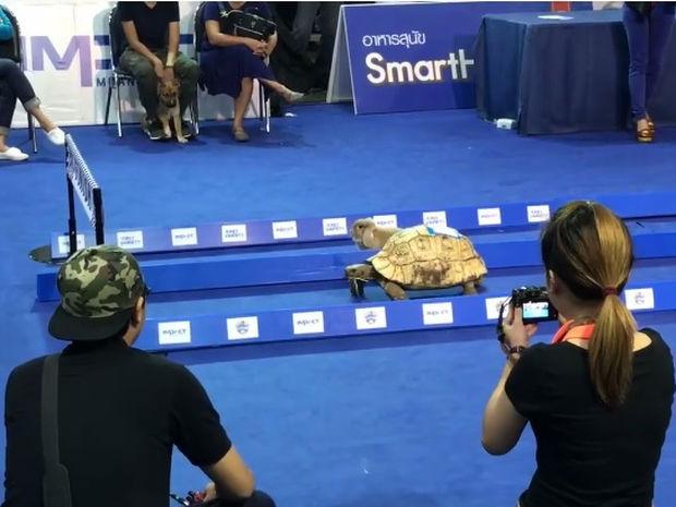 Ο λαγός και η χελώνα σε αληθινό αγώνα δρόμου! (video)