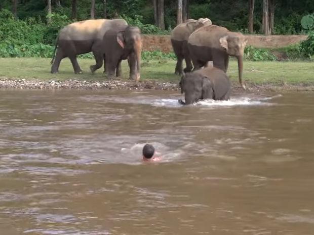 Ο ελέφαντας τρέχει να βοηθήσει έναν άντρα που παρέσυρε το ποτάμι! (video)