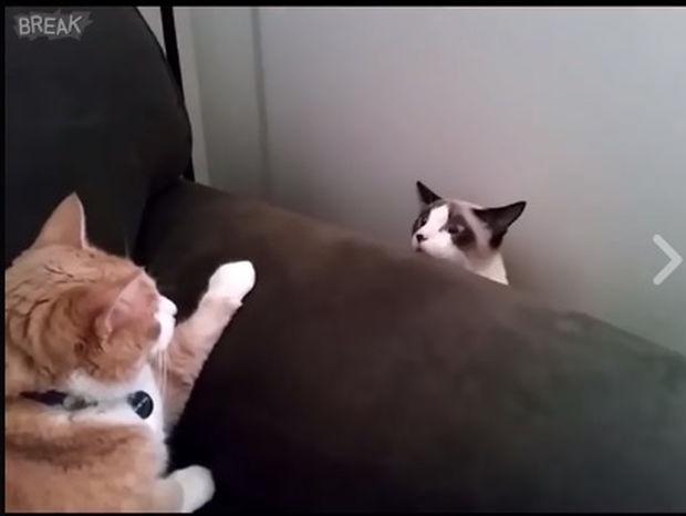 Όταν θες να τσεκάρεις αν ο σύντροφός σου είναι ακόμα θυμωμένος μαζί σου! (video)