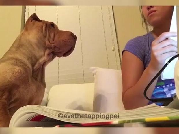 Ξεκαρδιστικό! Ο σκυλάκος θέλει χάδια... τώρα! (video)