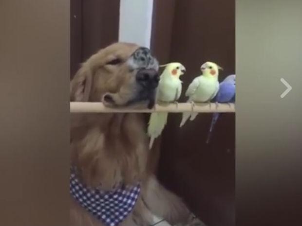 Ο σκυλάκος προσπαθεί όπως μπορεί να γίνει μέλος της ομάδας! (video)