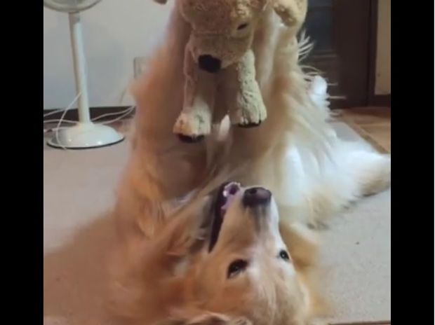 Ο σκυλάκος βρήκε το αγαπημένο του παιχνίδι! (video)