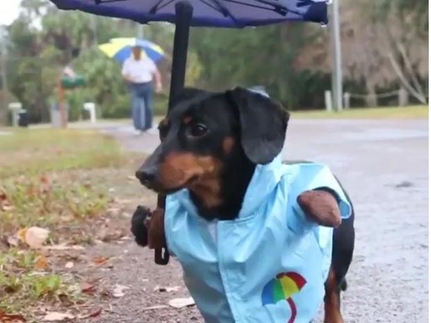 Το είδαμε κι αυτό! Αδιάβροχο για σκύλους! (video)