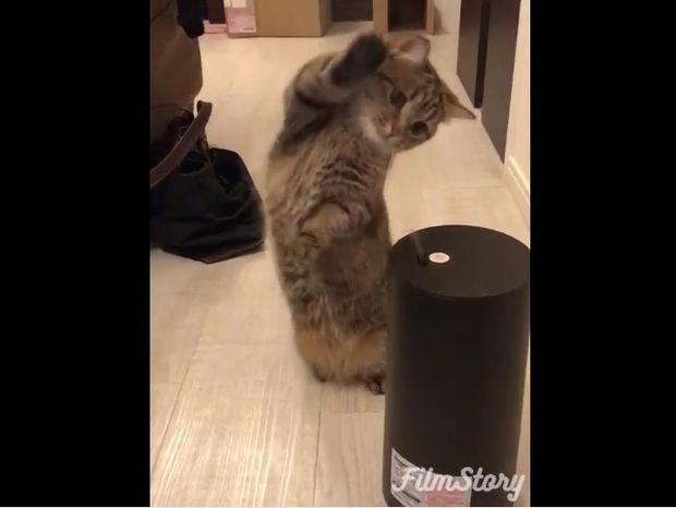 Ξεκαρδιστικό! Η γάτα τα βάζει με τον υγραντήρα δωματίου! (video)
