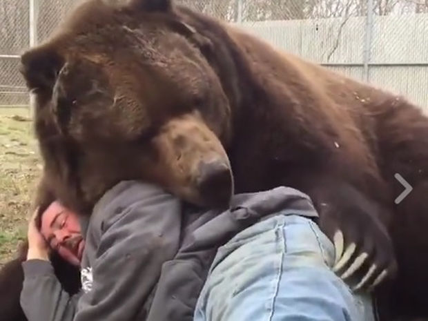 Η αρκούδα το μόνο που θέλει είναι χάδια! (video)