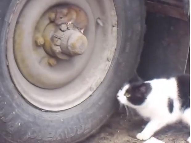 Επικό! Το ποντίκι ξεφεύγει από τη γάτα! (video)